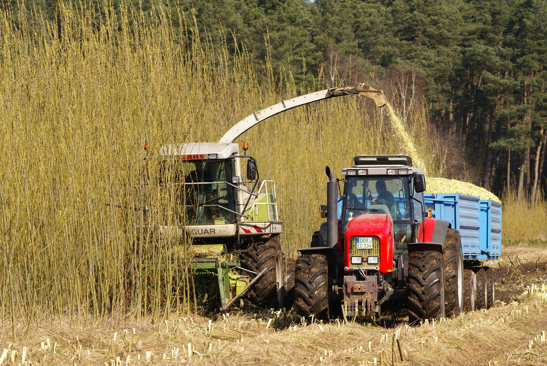 Geliebte FNR: Mediathek - Holz-Kurzumtriebsplantage &AV_66