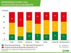 Kronenverlichtung in 2020 - Schadstufen nach Baumarten