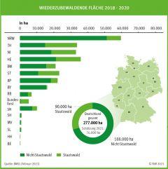 Schätzung der Schadflächen im Wald 2018 - 2020