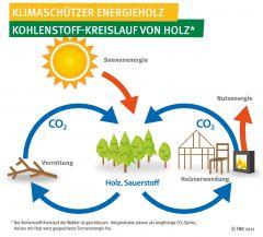 Klimaschützer Energieholz - Kohlenstoffkreislauf von Holz