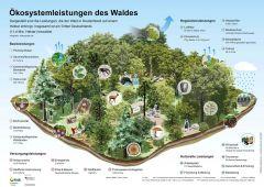 Infografik Ökosystemleistungen 1ha Wald