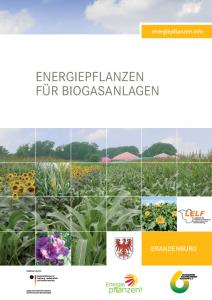 Energiepflanzen für Biogasanlagen - Regionalbroschüre Brandenburg