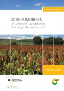 Sorghumhirsen - Ein Beitrag zur Diversifizierung des Energiepflanzenspektrums